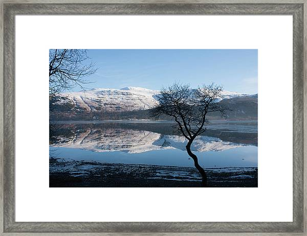 Derwentwater Tree View Framed Print