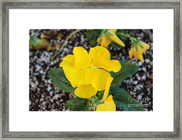 Floral Desert Beauty Framed Print