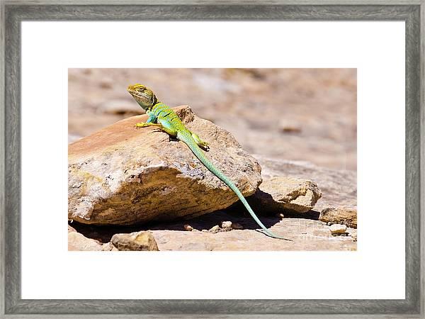 Desert Colors Framed Print