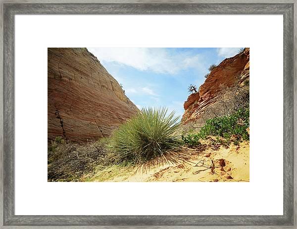 Desert Greenery Framed Print