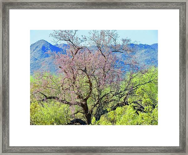 Desert Ironwood Beauty Framed Print