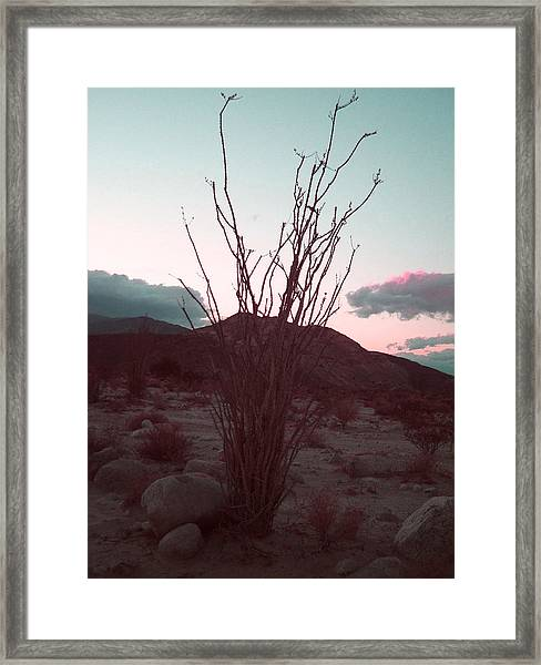 Desert Plant And Sunset Framed Print