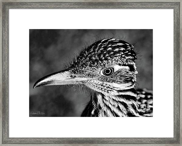 Desert Predator, Black And White Framed Print