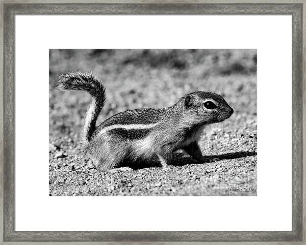 Scavenger, Black And White Framed Print