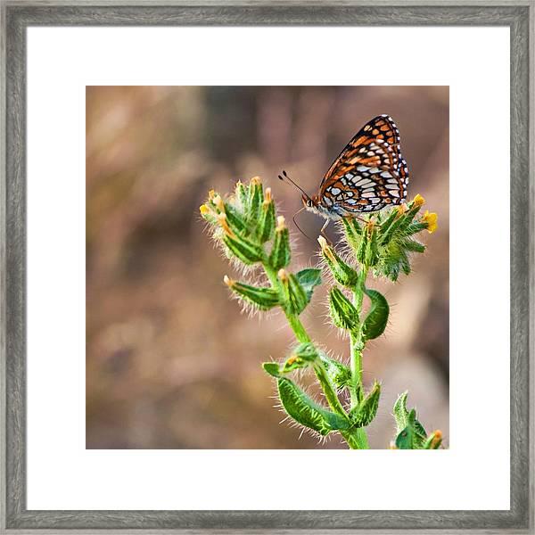 Desert Spring Life Framed Print