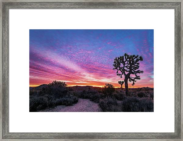 Desert Sunrise At Joshua Tree Framed Print