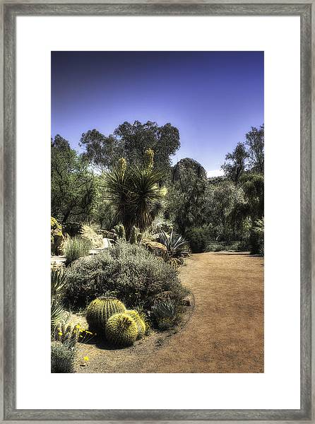 Desert Walkway Framed Print