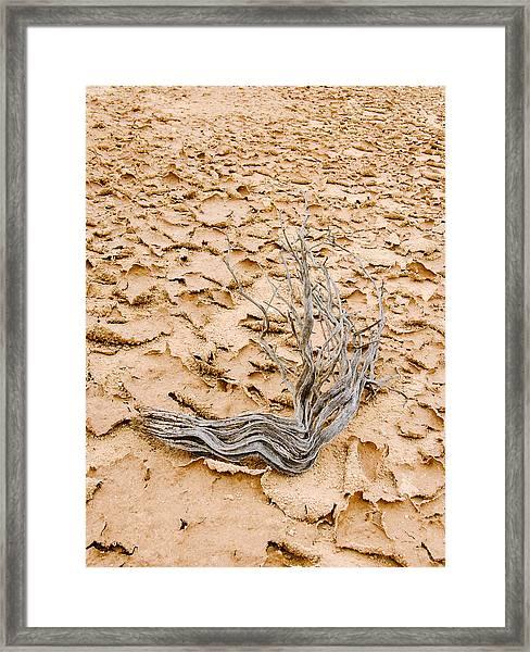 Desert Wood Framed Print