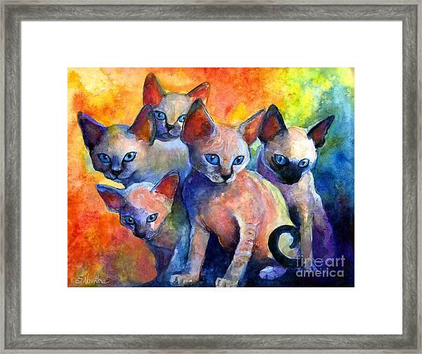 Devon Rex Kitten Cats Framed Print