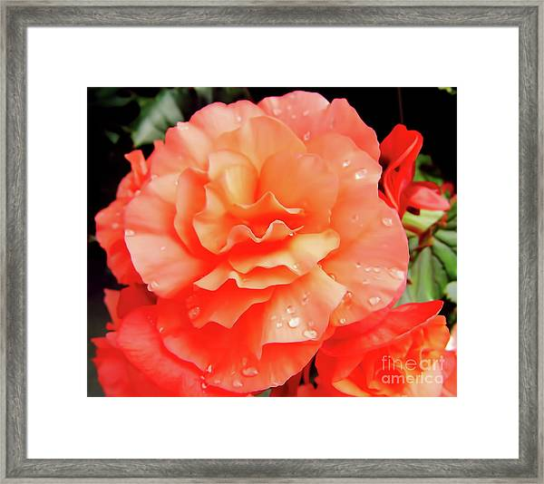 Dew Kissed Framed Print