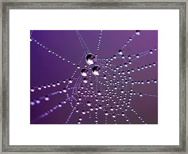 Dewed Web Framed Print