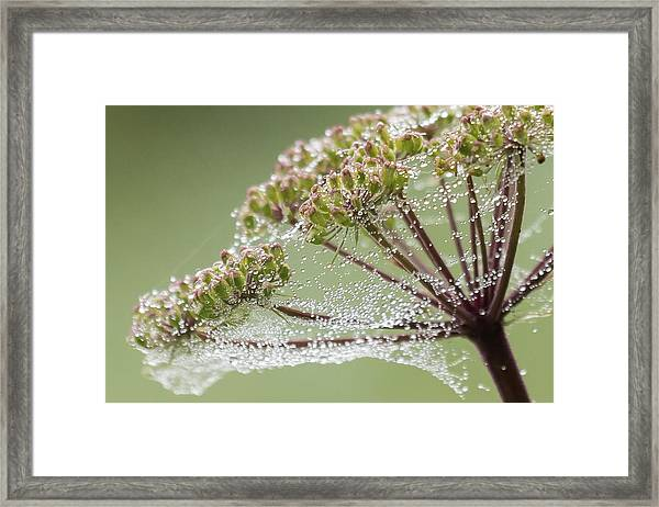 Dewey Jewels Framed Print