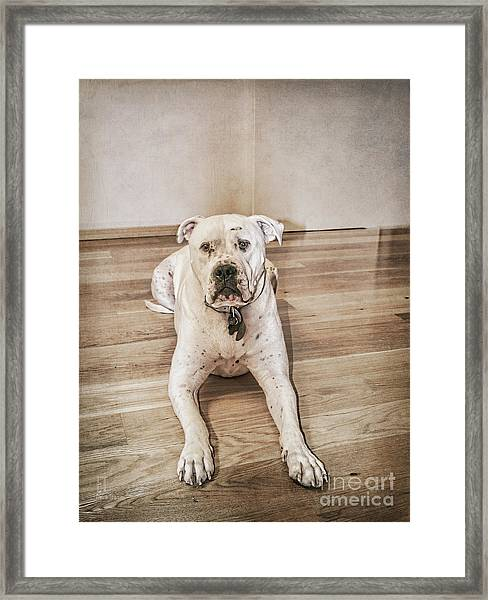 Did I Do Something Wrong? Framed Print
