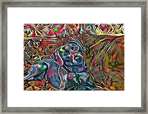 Did Somebody Say Treat? Blue Lacy Dog Framed Print