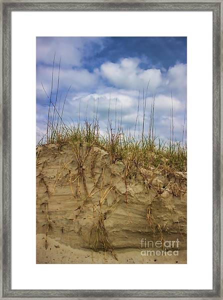 Digging In Deep In Sand Dunes Framed Print