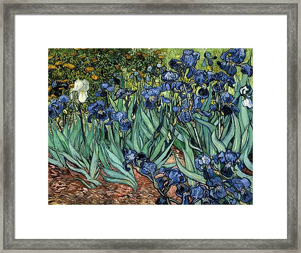 Digital Remix Irises Framed Print