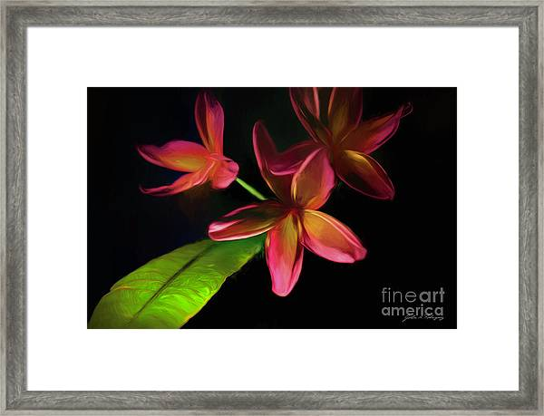 Digitized Sunset Plumerias #2 Framed Print