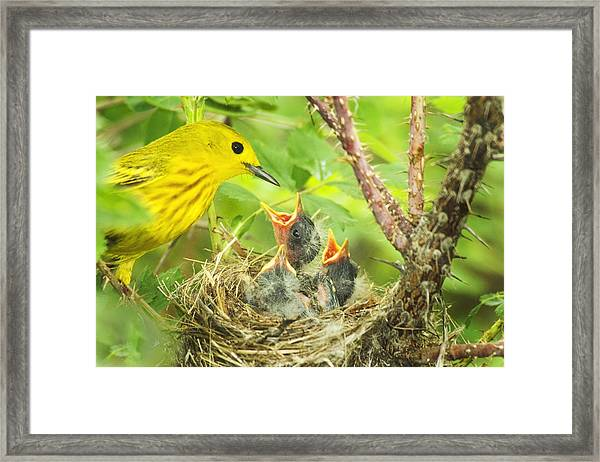 Dinner At The Warblers Framed Print