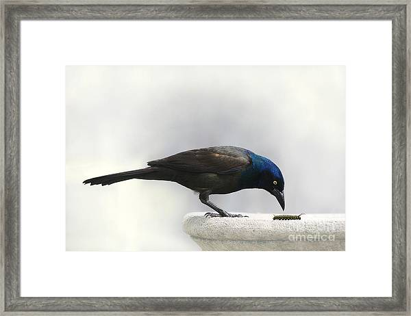 Dinner Fit For A Monarch Framed Print