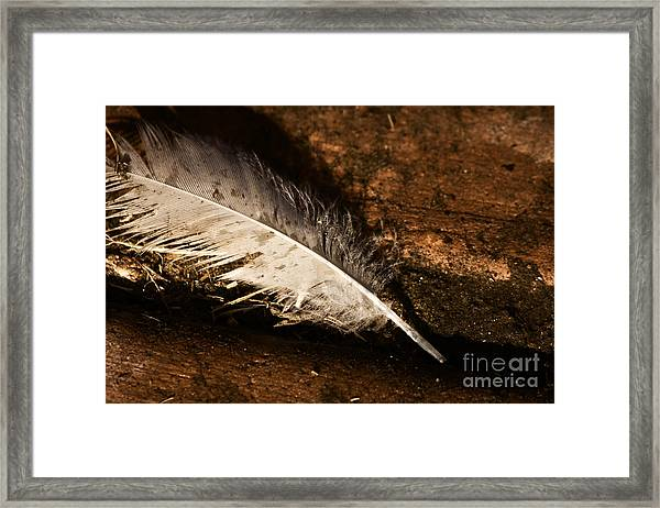Discarded Feather Framed Print