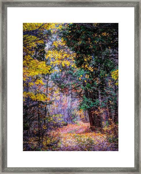 Distant Path Framed Print
