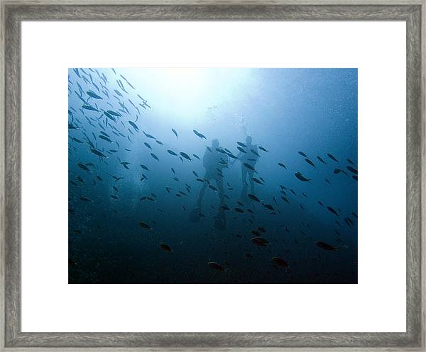 Diving With Fishes Framed Print