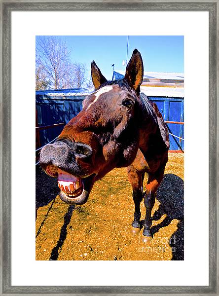 Do You Have A Treat For Me? Framed Print