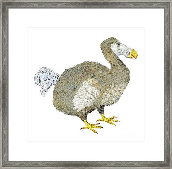 Dodo Bird Protrait Framed Print