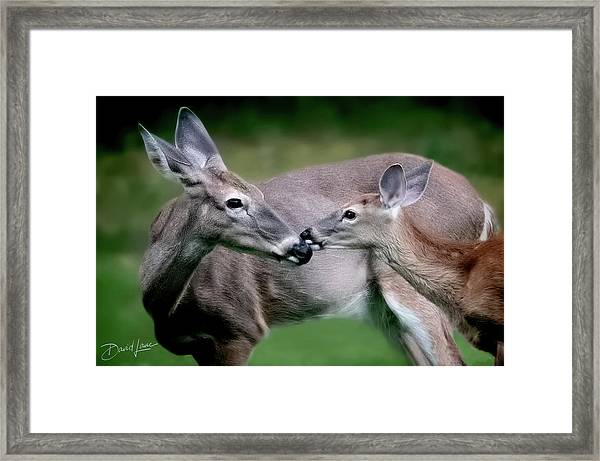 Framed Print featuring the photograph Doe A Deer by David A Lane