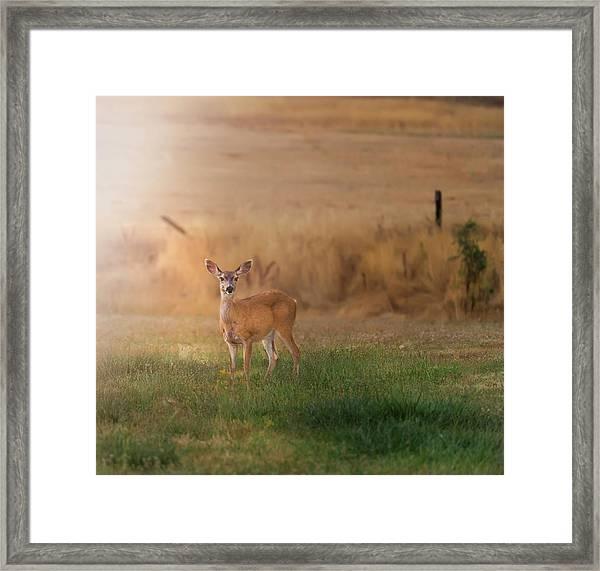 Doe At Sunset Framed Print