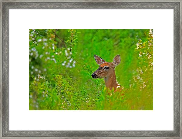 Framed Print featuring the photograph Doe In Springtime by William Jobes
