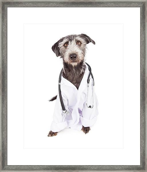 Dog Dressed As Veterinarian Framed Print
