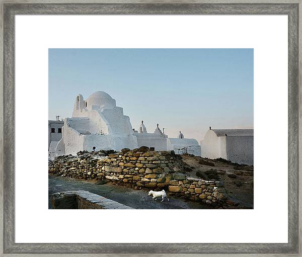 Dog In Mykonos Framed Print