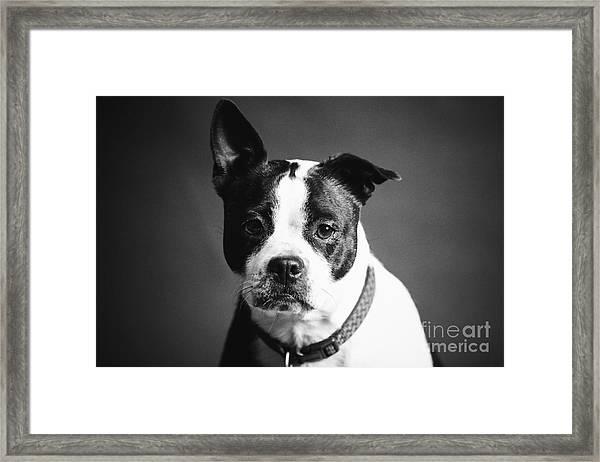 Dog - Monochrome 1 Framed Print