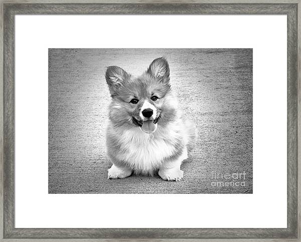 Puppy - Monochrome 6 Framed Print