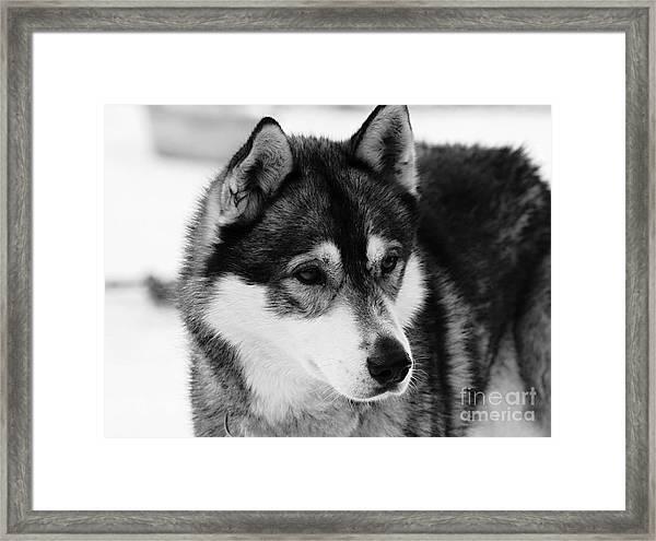 Dog - Monochrome 3 Framed Print