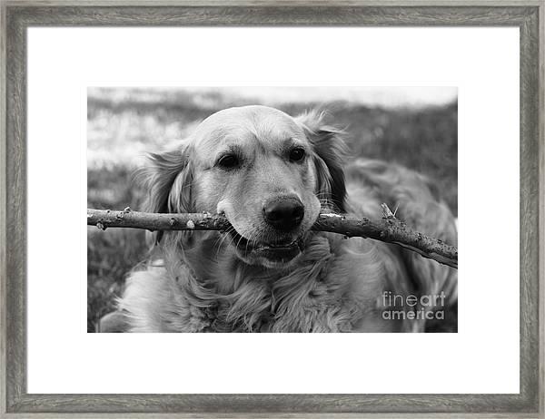 Dog - Monochrome 4 Framed Print