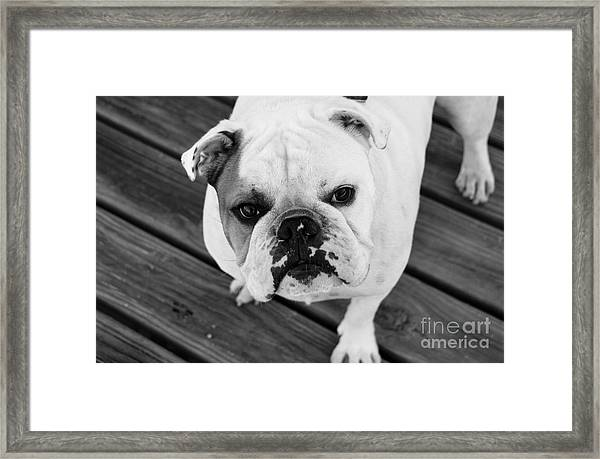 Dog - Monochrome 6 Framed Print