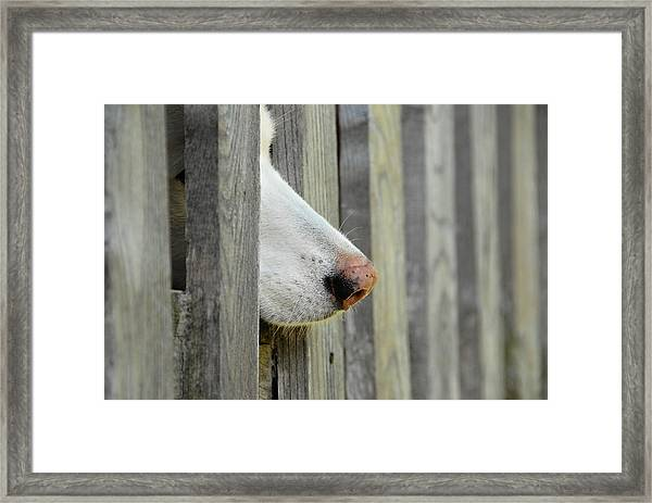 Dog Nose Framed Print