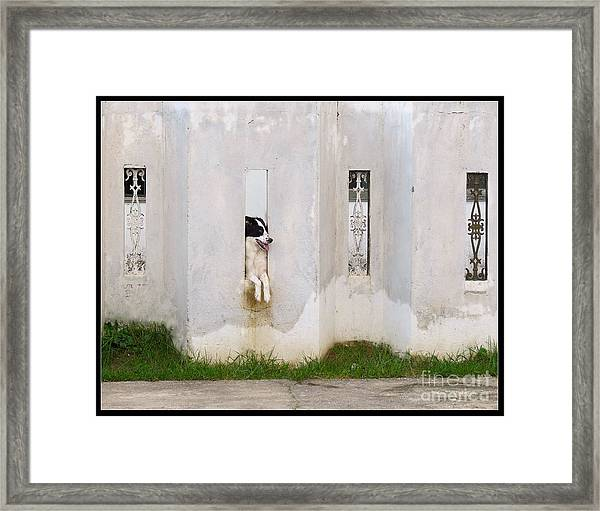 Dog Watching Framed Print