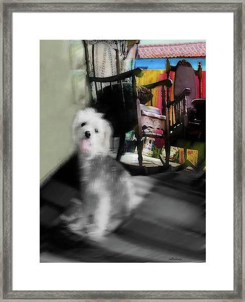 Dogie In The Patio Art  Framed Print
