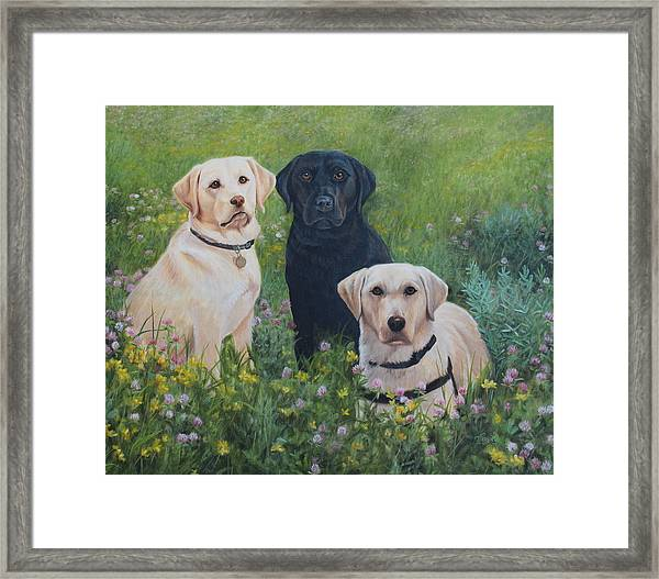 Dogs With Wings Framed Print