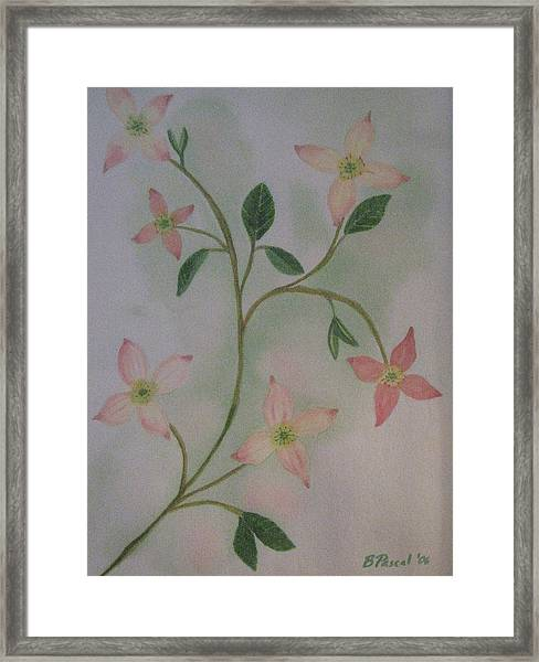 Dogwood Spring Framed Print by Barbara Pascal