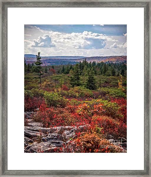 Dolly Sods Wilderness In Autumn 4273 Framed Print