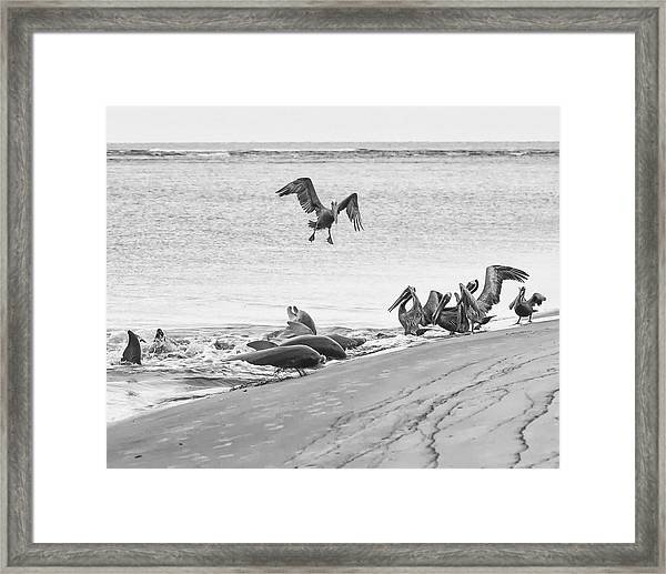 Dolphin And Pelican Party Framed Print