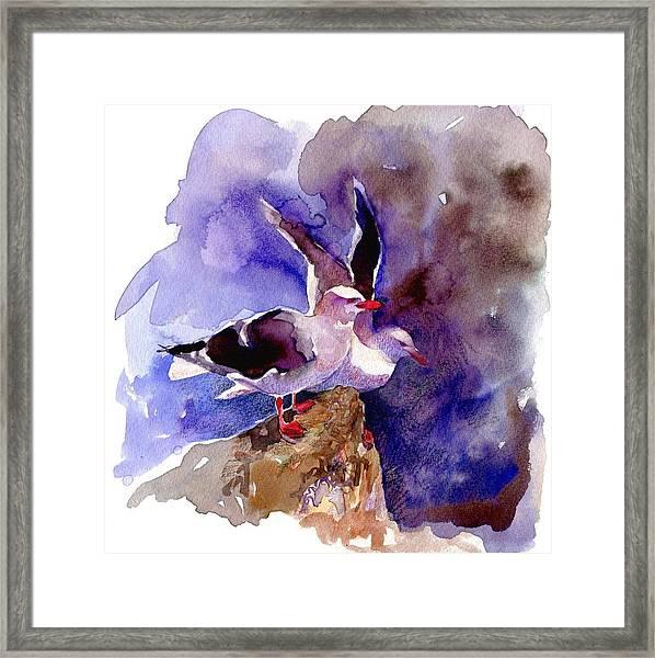 Dolphin Gulls Framed Print