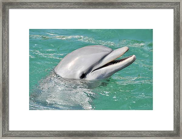 Dolphin Smiling Close Up Framed Print