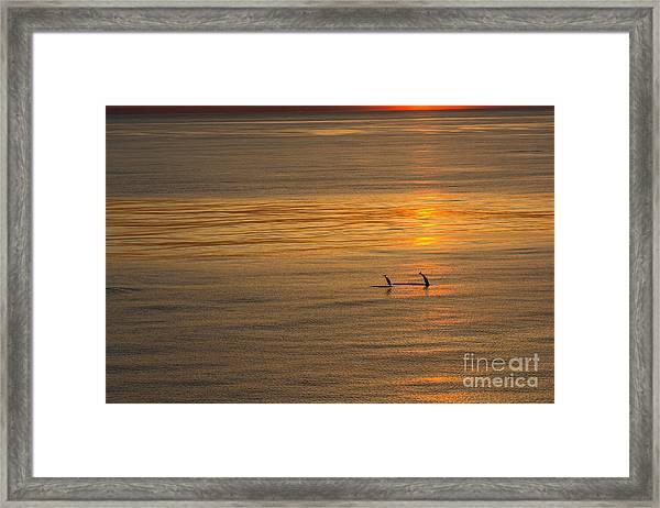 Dolphin Sunset Framed Print
