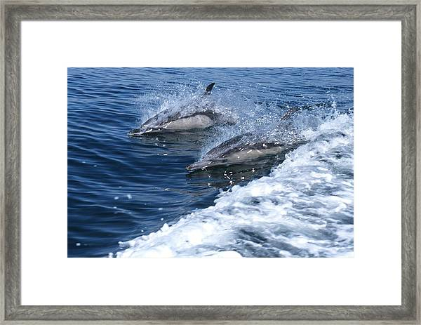 Dolphin Surfing Fantasy Framed Print by Don Kreuter