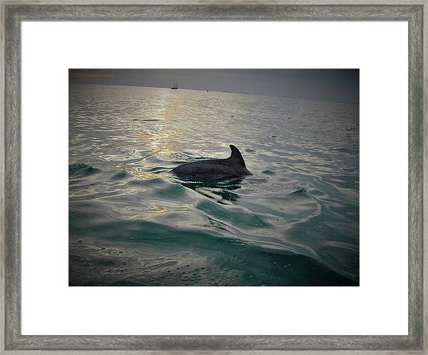 Dolphin Watching Framed Print